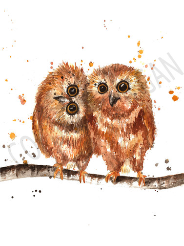 Owls Sample