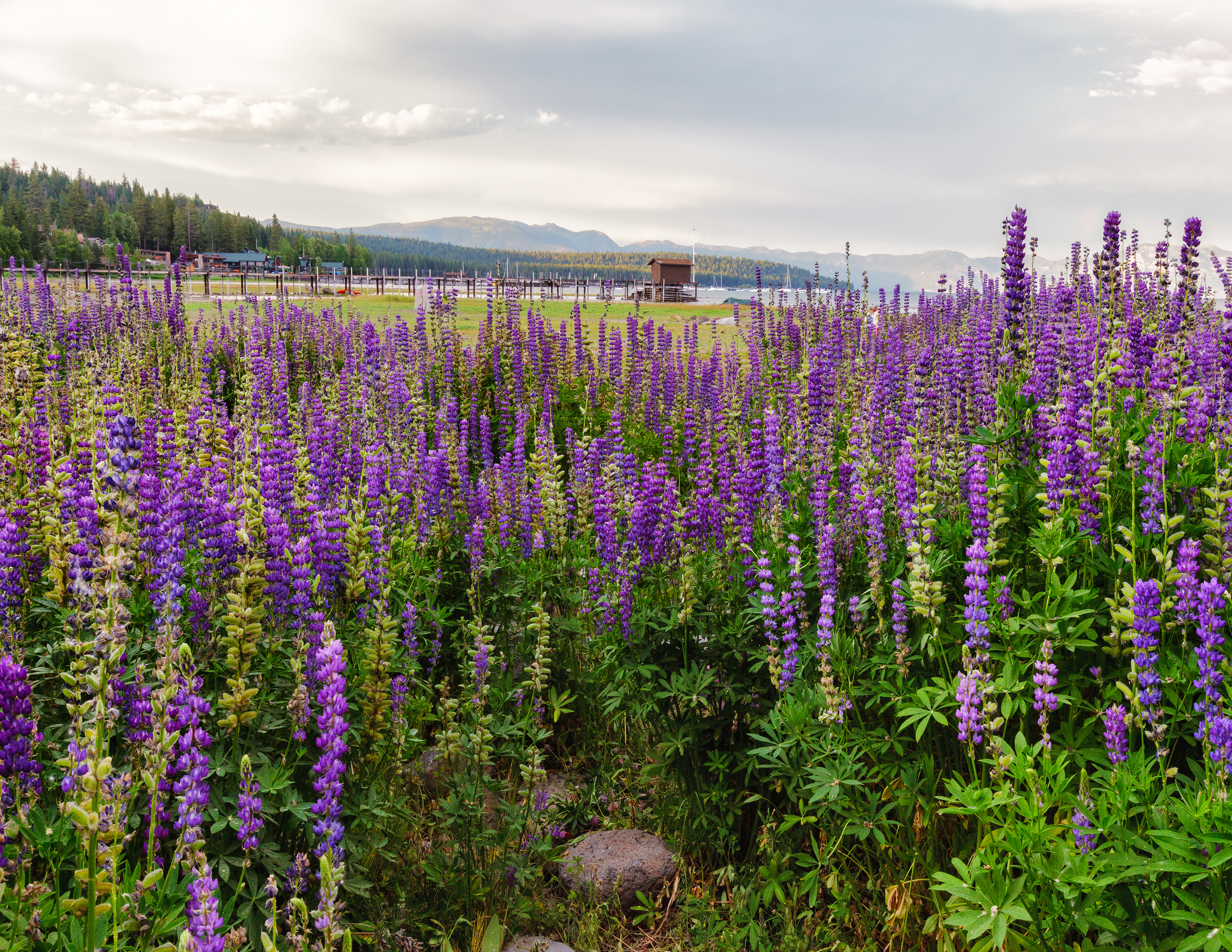 BoathouseThrough The Lupin