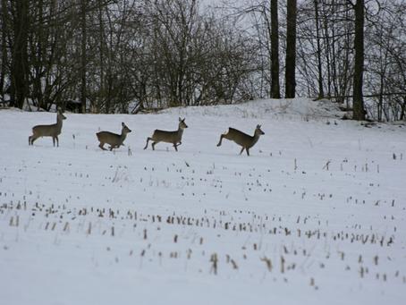 Winterliche Freizeitaktivitäten und Wildtiere. Rücksichtsvoll durch die verschneite Natur