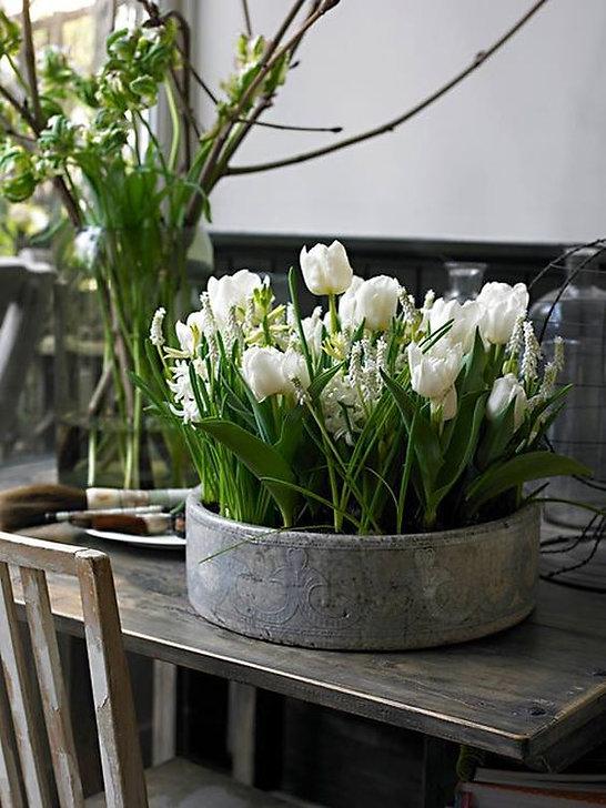 Fleur 25.02.21.jpg