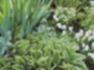 Jardin blanc 18.06.20 2.jpg