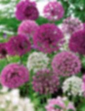 Fleur 16.jpg