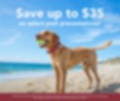jun20-social-media-week2-dog.jpg