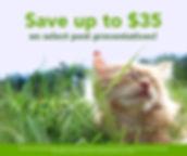 jun20-social-media-week2-cat.jpg