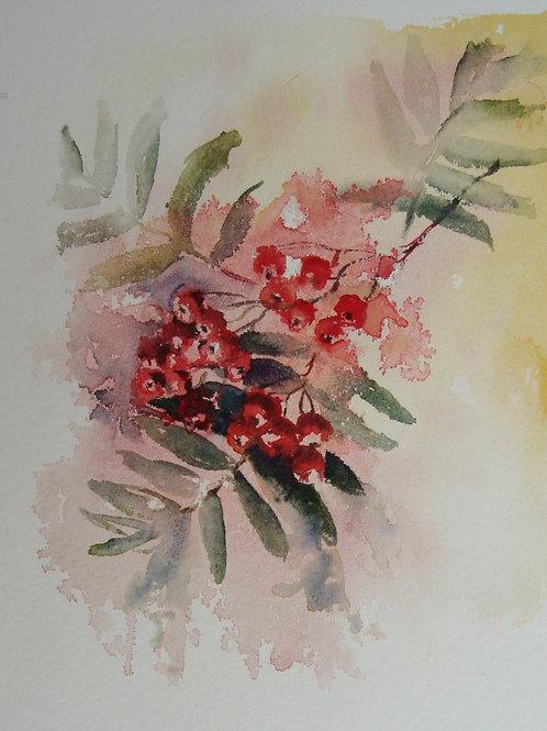 Rowan Berries, A5 greetings card
