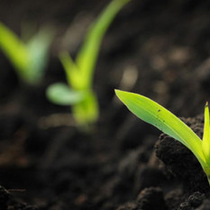 THE BIG CHALLENGES FOR AGRICULTURE SECTOR