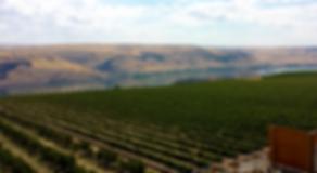 columbia-river-gorge-wine-tours-vino-ven