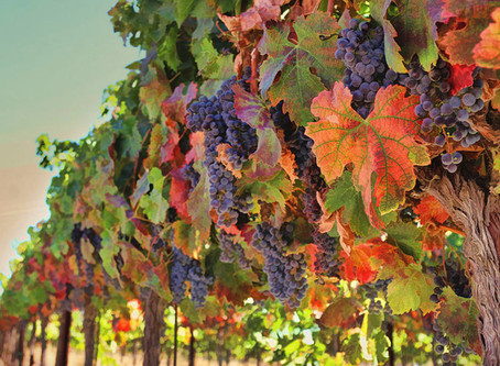 Fall in Oregon Wine Country