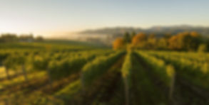 Willamette-Valley-Vineyards-Tualatin-Est