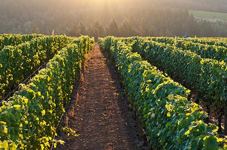 Oregon White Wines