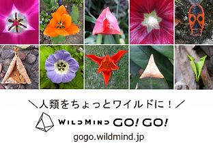 s640-WMGG_MasayoAve.jpg