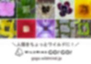 s640-WMGG03.jpg