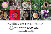 s640-WMGG01.jpg