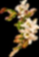 kisspng-flower-art-nouveau-art-deco-clip