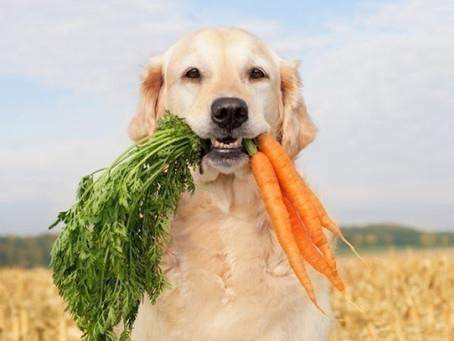 O que você precisa saber para manter seu cão saudável?