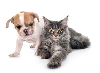 puppy-and-cat-5T7NP2E.JPG
