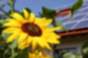 Sunflower with solar background.jpg