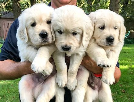 Pups 5 weeks-1_edited.jpg