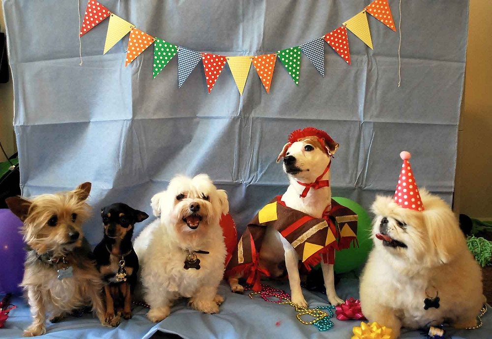 dogs at a party for non stop kids entertainment