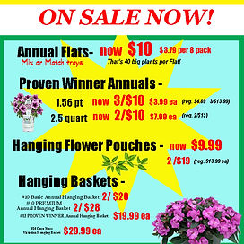 ad for sale annuals.jpg