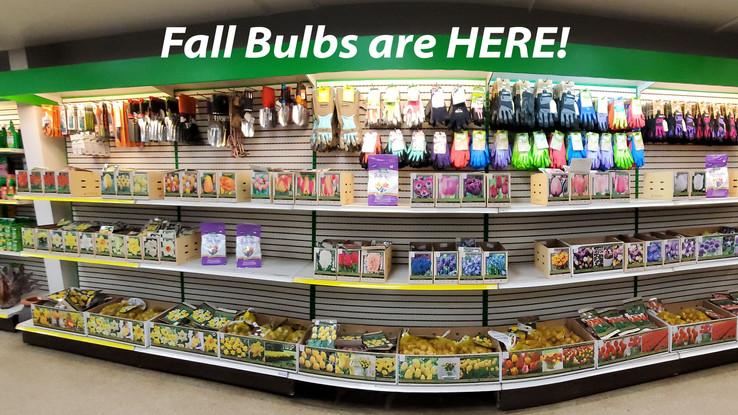 Fall Bulbs 2021.jpg