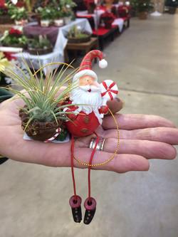 Tillandsia ornaments