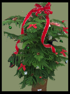 decorated norfolk pine 10 inch