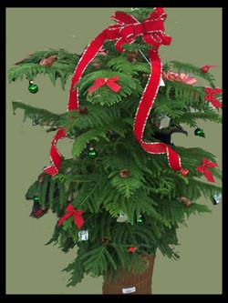 decorated norfolk pine 10 inch