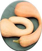 brown neck pumpkin oval.jpg