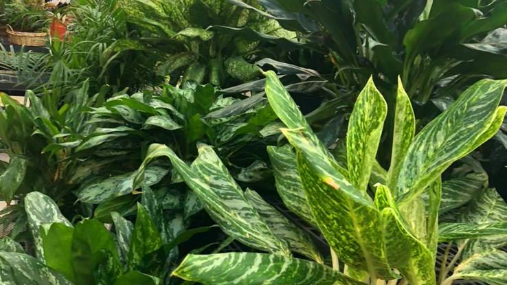 more foliage