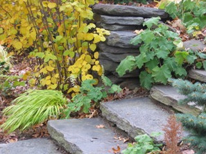 Garden stone steps.