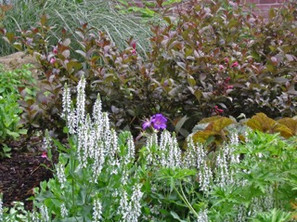 Garden Perreniels.