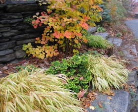 Garden plantings and grasses.