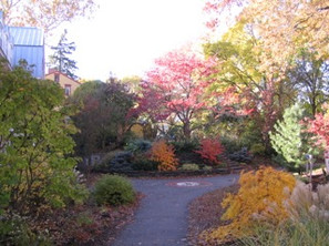 Fall Colors in the Garden.