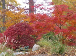 Garden trees in Fall colors.