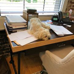 Wally working