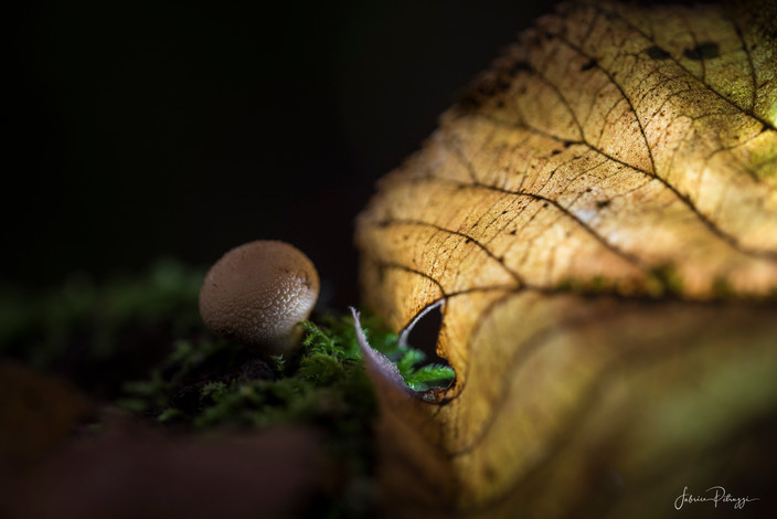 Mushroom door