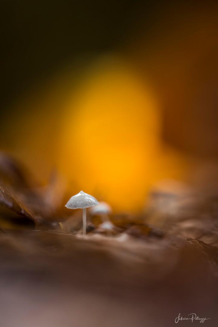 Micro Mushroom