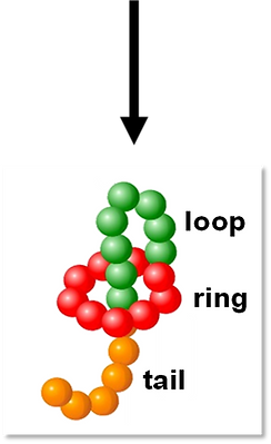 Lasso peptide structure.png