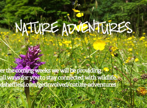 Sheffield & Rotherham Wildlife Trust Activities for All Ages