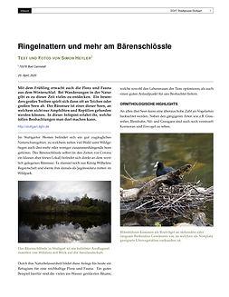 DGHT_Infopost___Ringelnatter-1.jpg