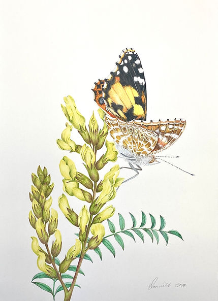 Painted Lady and Milkvetch