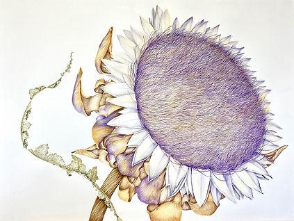 Dried Artichoke Blossom