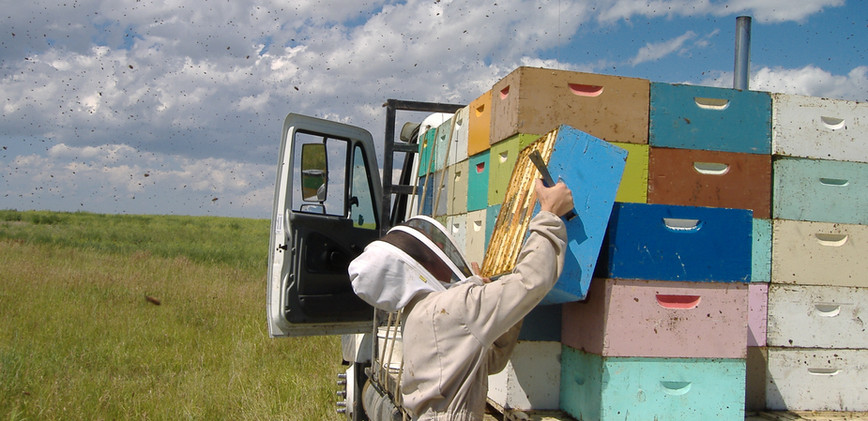 taking honey boxes off