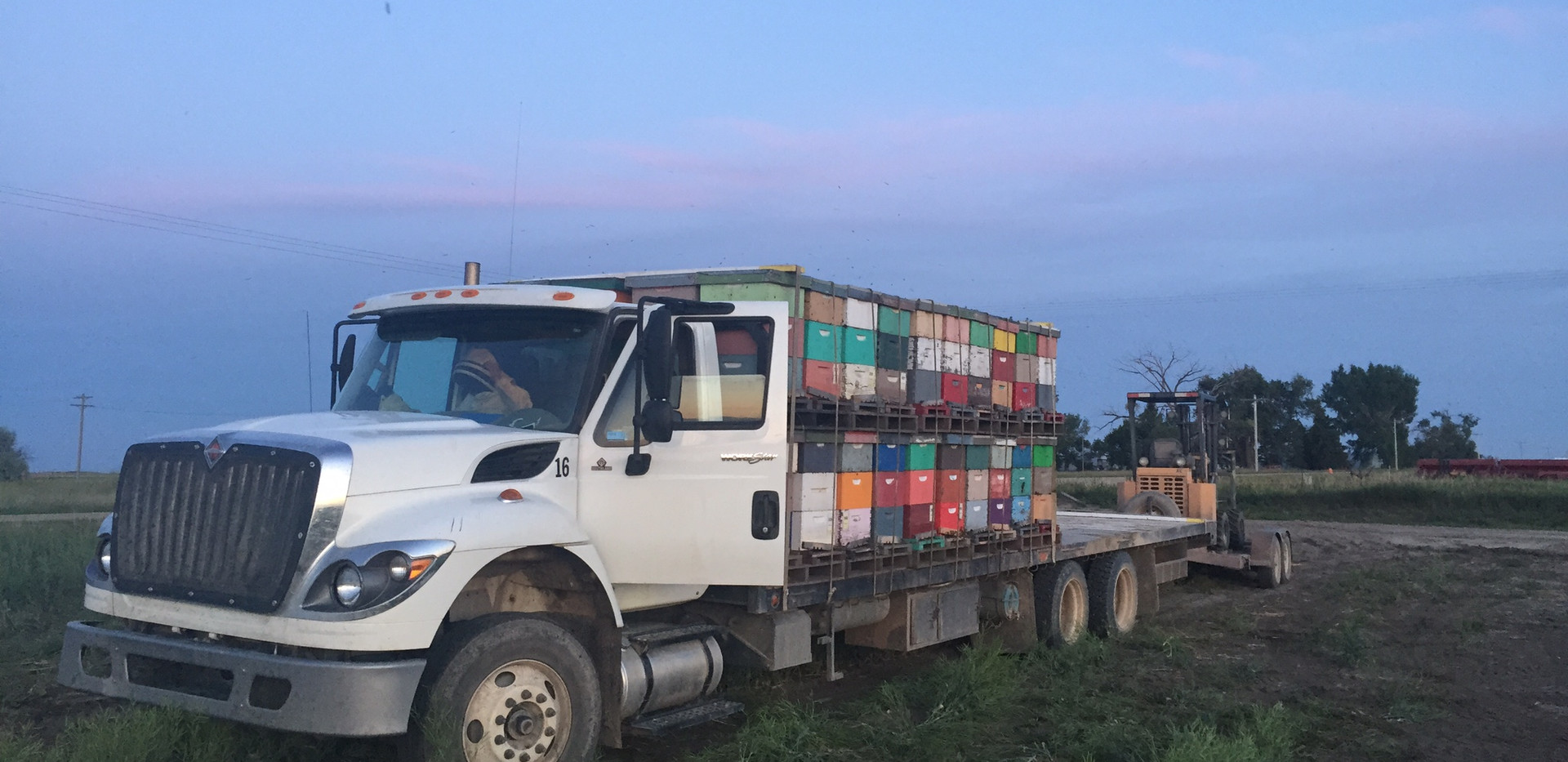 loading hives out of pollination