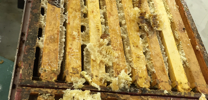 honey to be extracted