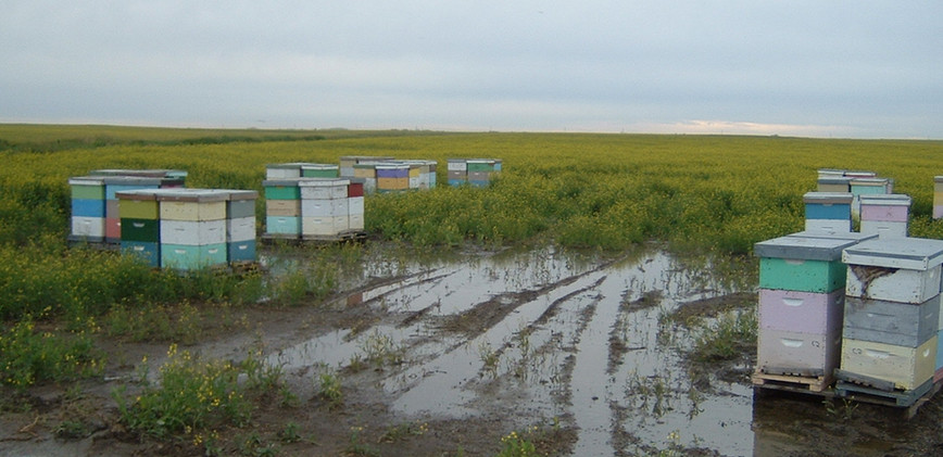 pollination field