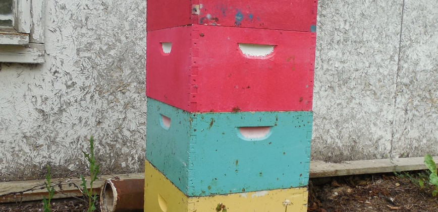 Colorful hive