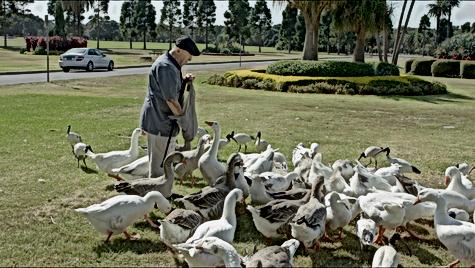 A Mensch & His Geese