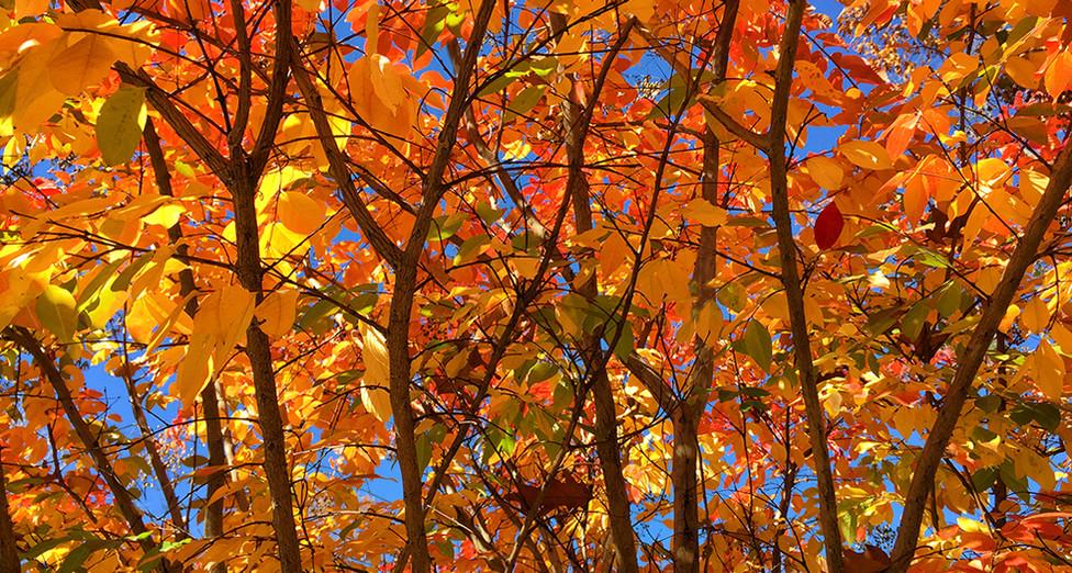 Crepe Myrtle Branch Pattern.jpg